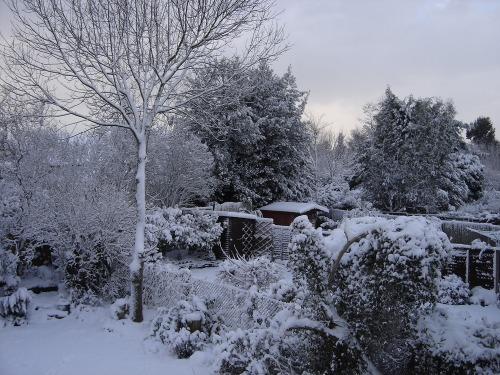 Snowy_december_003