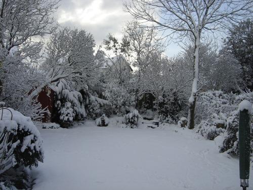 Snowy_december_005